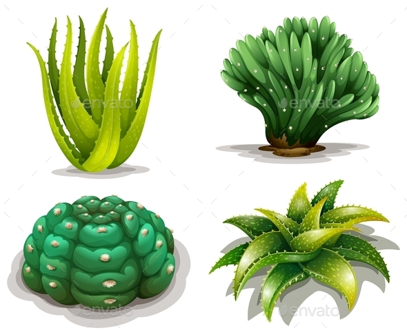 Aloe Vera Plants and Cacti - Flowers & Plants Nature