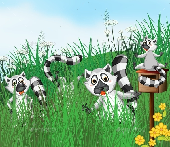 A Ring-Tailed Lemur - Animals Characters