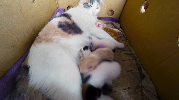 Breast feeding cat video