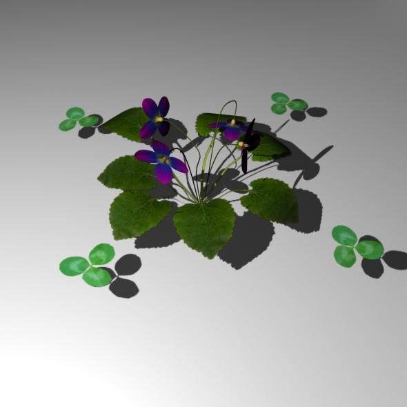 Flowers (Viola, Trifolium) [HIGH POLY] - 3DOcean Item for Sale