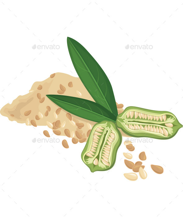 Sesame Seeds and leaves - Vectors