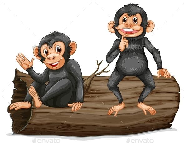 Chimpanzee - Animals Characters