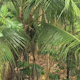 Tropical Downpour In Jungle - VideoHive Item for Sale
