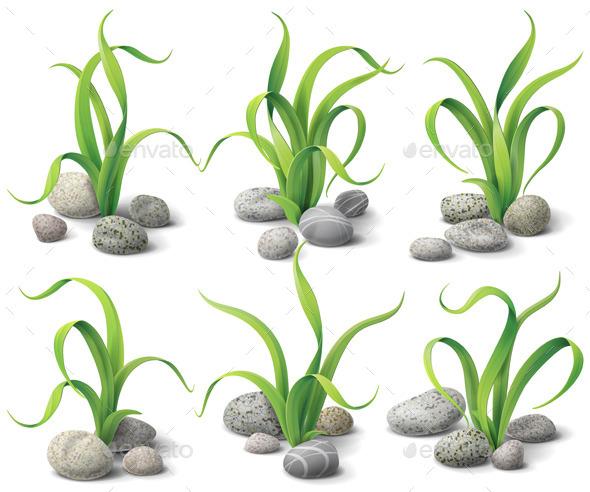 Algae and Stones Set - Flowers & Plants Nature