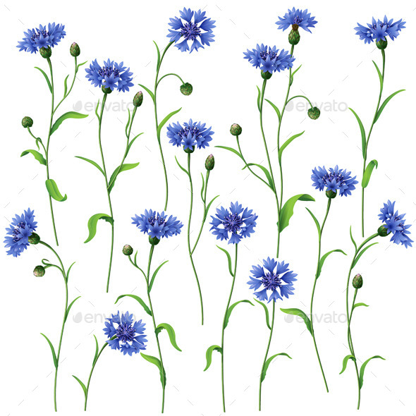 Blue Cornflowers Set - Flowers & Plants Nature
