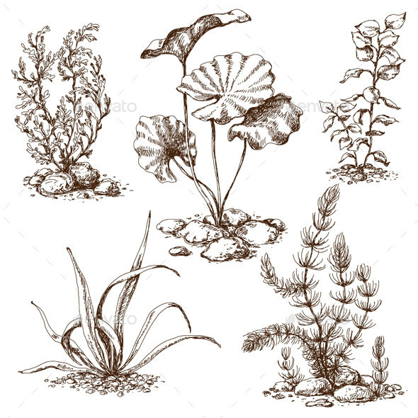 Sketch of  Underwater Plants - Flowers & Plants Nature