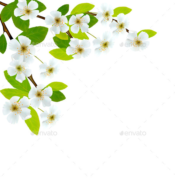 Blossoming Tree Branch with Spring Flowers - Flowers & Plants Nature