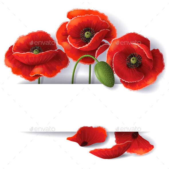 Red Poppy Flowers - Flowers & Plants Nature