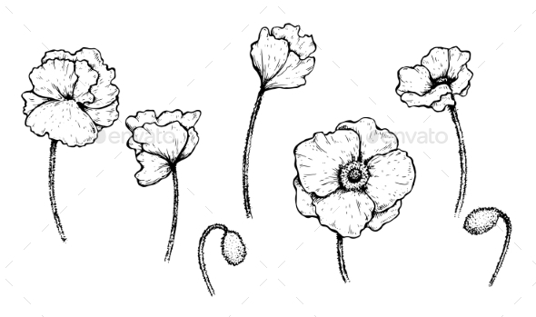 Set of Poppies - Flowers & Plants Nature