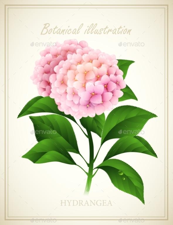 Hydrangea - Flowers & Plants Nature