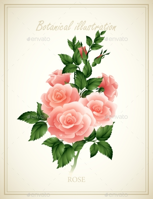 Flower Illustration  - Flowers & Plants Nature