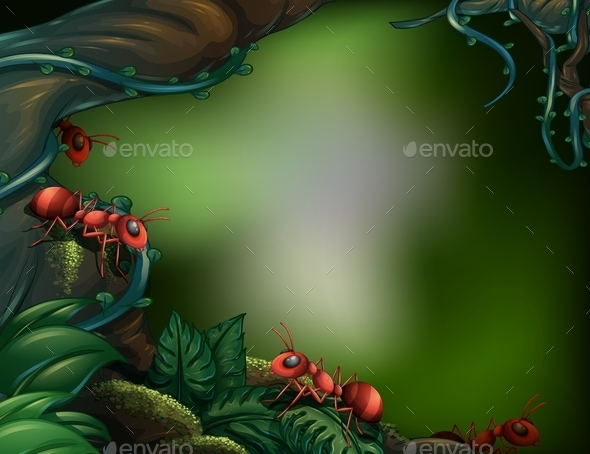 Ants in Forest  - Landscapes Nature