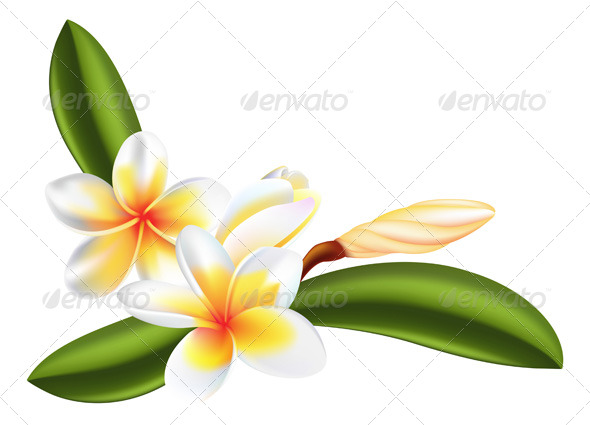 Frangipani or Plumeria Flower - Flowers & Plants Nature