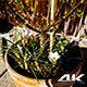 Blooming Flower on a Sunny Spring Day - VideoHive Item for Sale