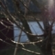 Tree Branches in The Sun Pack - VideoHive Item for Sale