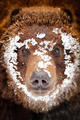 Bear portrait - PhotoDune Item for Sale