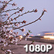 Spring Blossoms along a California Freeway - VideoHive Item for Sale