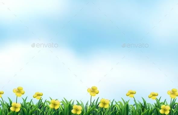 Flower Field - Flowers & Plants Nature