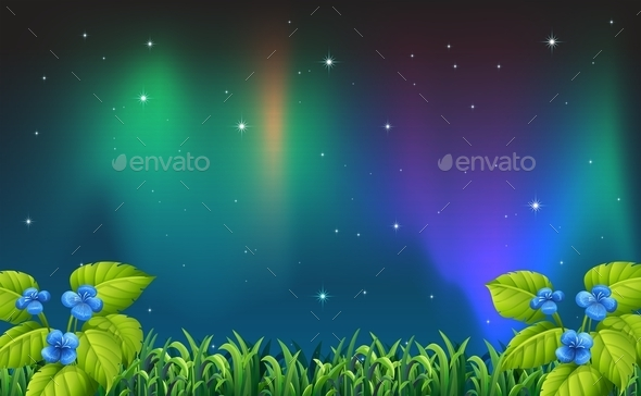 Night Scene - Flowers & Plants Nature