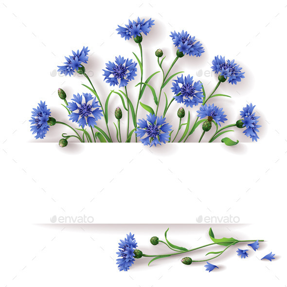 Blue Cornflowers - Flowers & Plants Nature