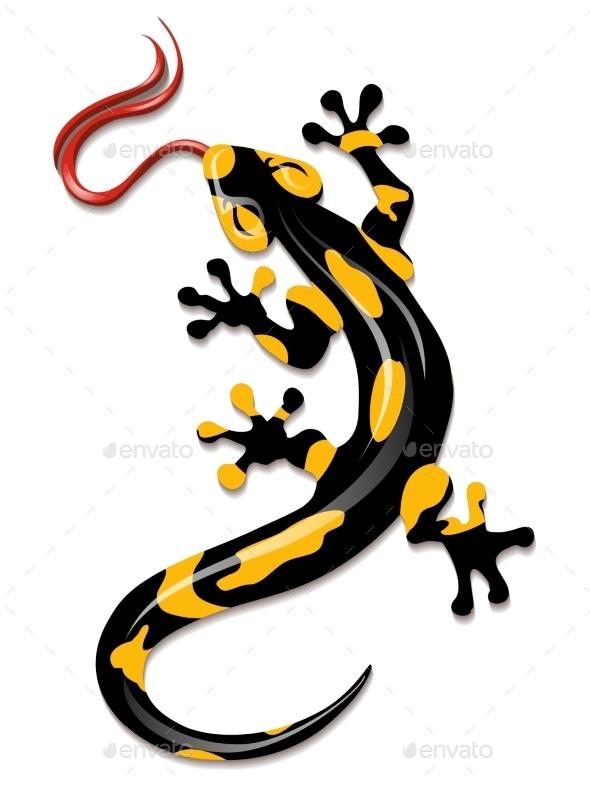Salamander - Animals Characters