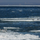 Seagulls on Ice Floes Drifting in the Sea - VideoHive Item for Sale