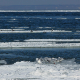 Seagulls on Ice Floes Drifting in the Winter Sea - VideoHive Item for Sale