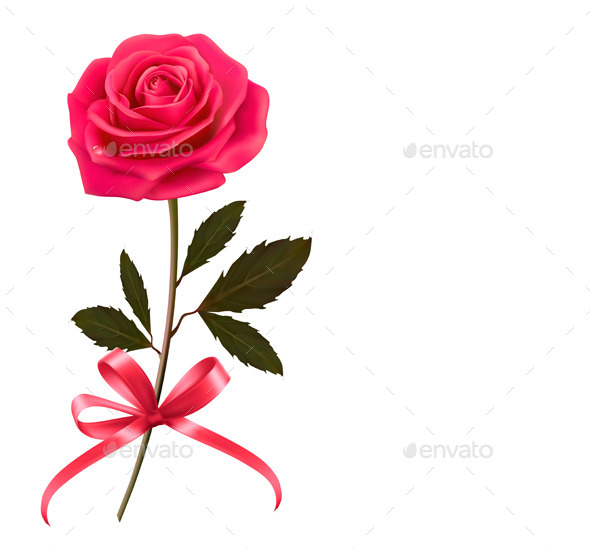 Background with Rose and a Bow - Flowers & Plants Nature