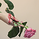 Hand Holding a Bloody Rose - VideoHive Item for Sale