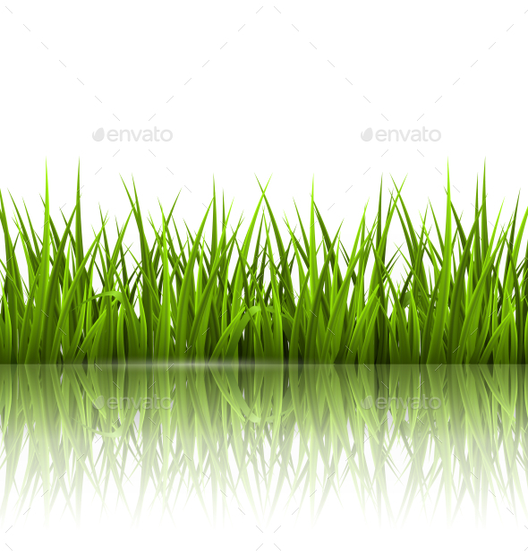 Green Grass Lawn with Reflection on White - Landscapes Nature