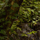 Water Stream In The Forest View - VideoHive Item for Sale
