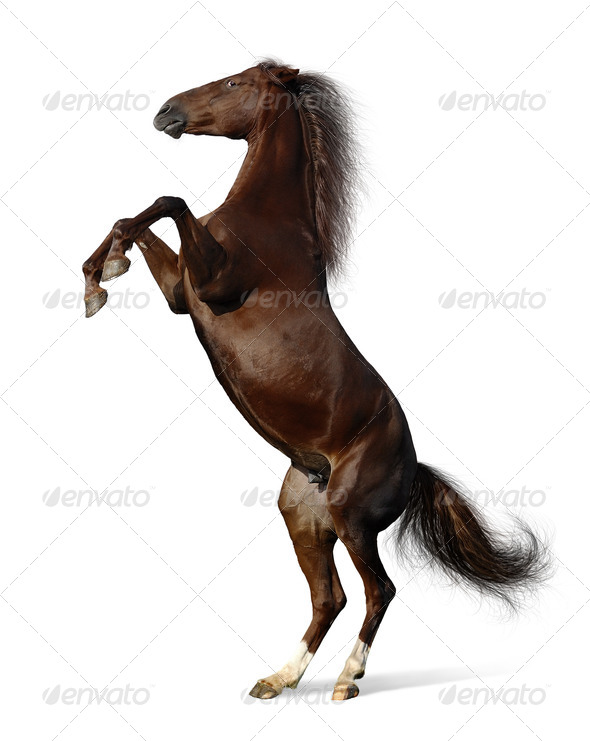Budenny Horse Rear - Stock Photo - Images