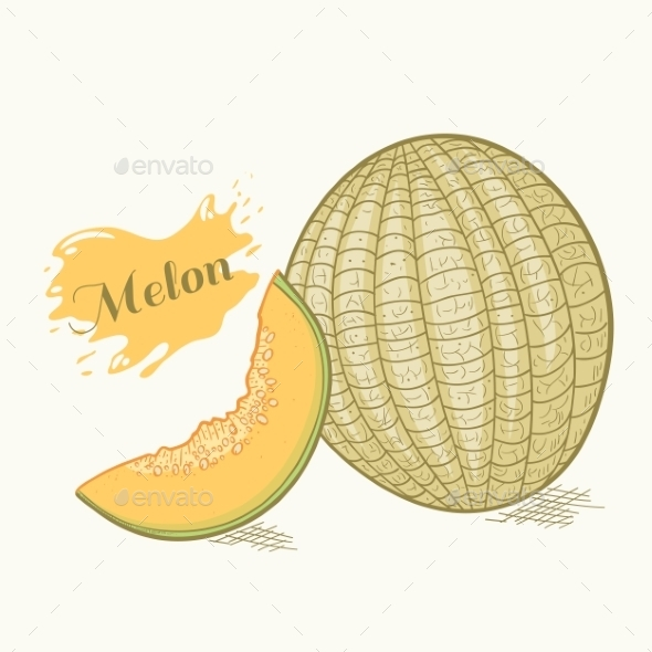 Hand Drawn Melon - Food Objects