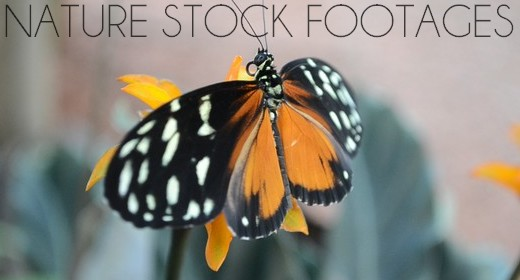 Nature Stock Footages