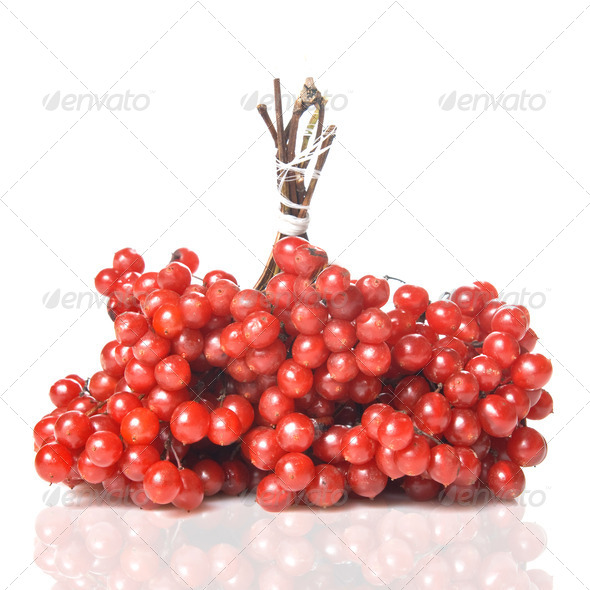 Berries of red Viburnum - Stock Photo - Images