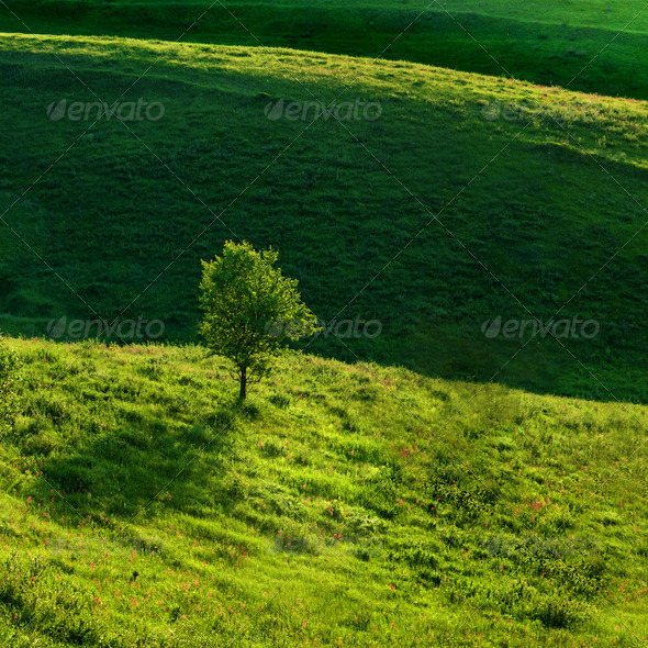 Green meadow and tree - Stock Photo - Images