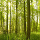 Forest & Trees - VideoHive Item for Sale