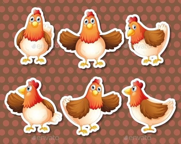 Chicken - Animals Characters