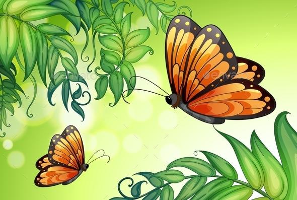 Butterflies Background  - Landscapes Nature