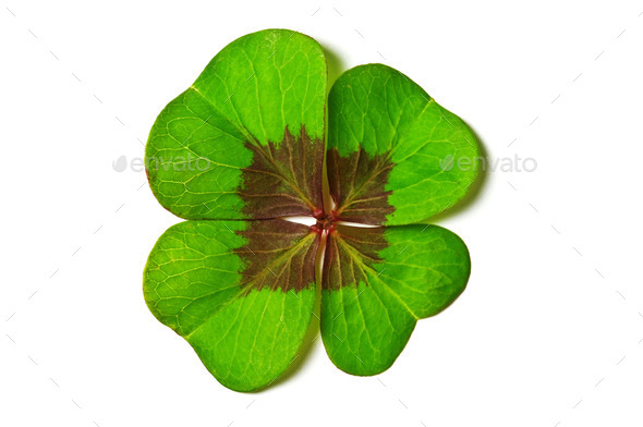 clover - Stock Photo - Images