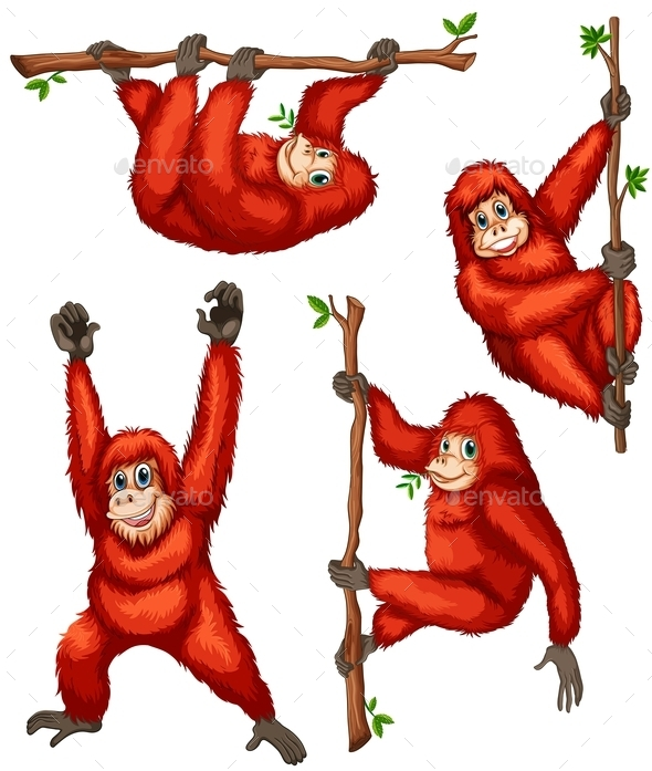Orangutan - Animals Characters
