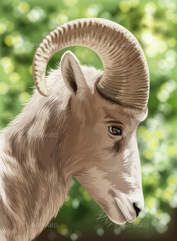 Wild Goat - Animals Characters