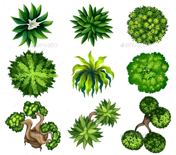 Topview Of Different Plants By Blueringmedia Graphicriver