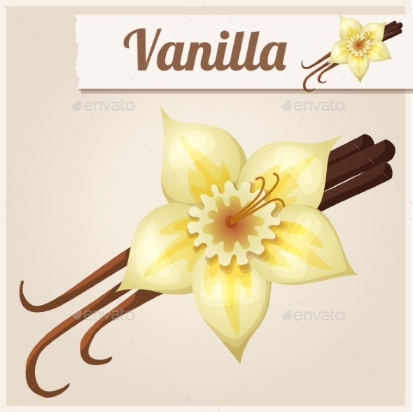 Vanilla. Detailed Vector Icon - Food Objects