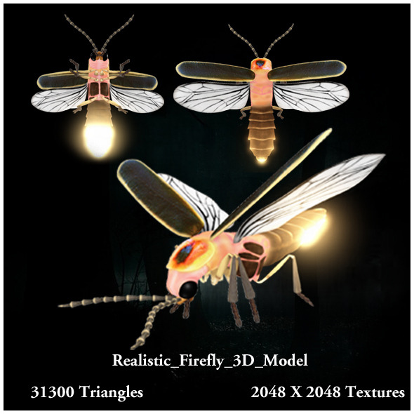 Realistic Firefly 3D Model - 3DOcean Item for Sale