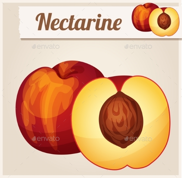 Nectarine.  Detailed Vector Icon.  - Food Objects