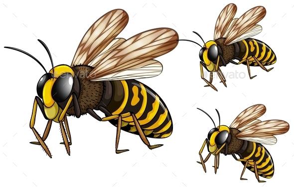 Wasps  - Animals Characters
