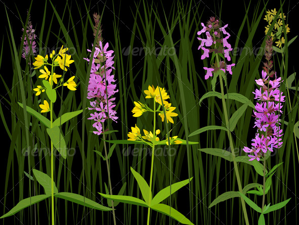 Meadow herbs - Flowers & Plants Nature