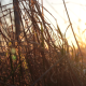 Golden Hour Grass - VideoHive Item for Sale