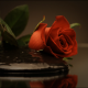 Mud in Red Roses - VideoHive Item for Sale